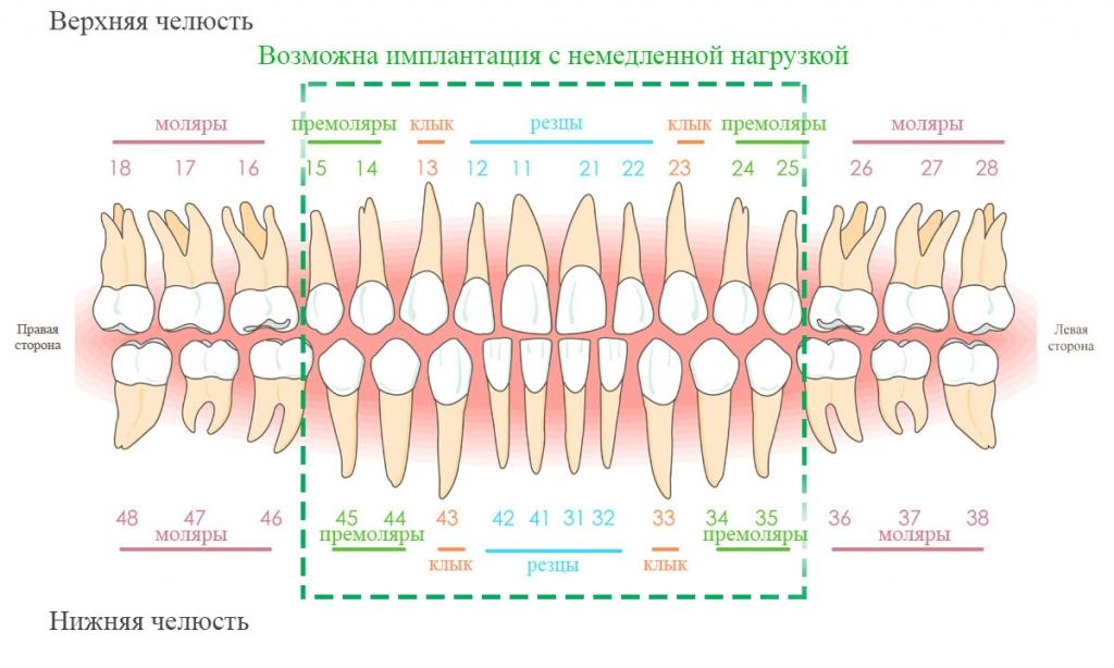 Зубы человека формулы зуб у человека