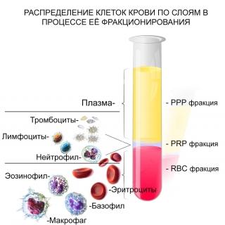 Выделение PRP фракции